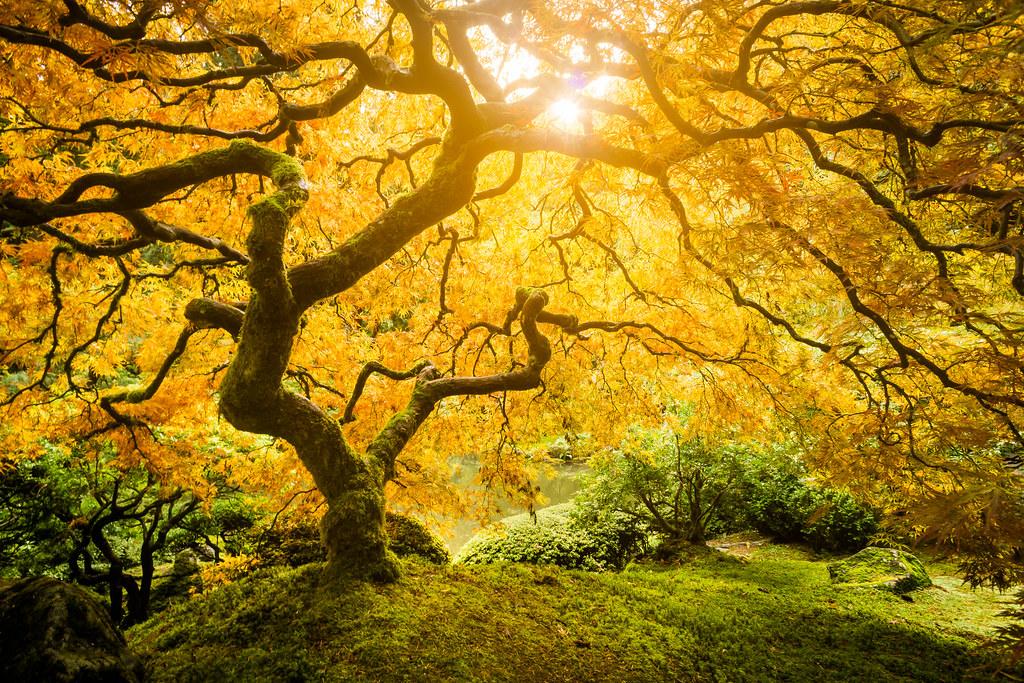 Tree of Life photo